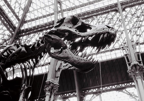Dinosaur in Oxford University Museum