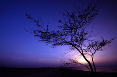 End of the day (Ammar Alothman) Tags: trees winter sunset sea sky tree nature landscape death interesting fantastic nikon flickr gulf calendar d70s 2006 100v10f explore kuwait ammar kuwaitcity kw q8  sigma1020  bluelist 123faves ammaralothman 3mmar  treesubject kuwaitvoluntaryworkcenter   alemdagqualityonlyclub