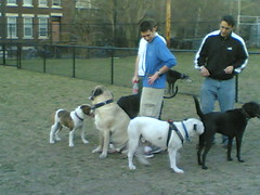 Somerville has a Dog Park
