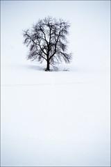Path (Walter Quirtmair) Tags: snow tree film austria path 2006 february swq takenbywalter eos300 vorderstoder stodertal