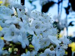 Ancora fiori...