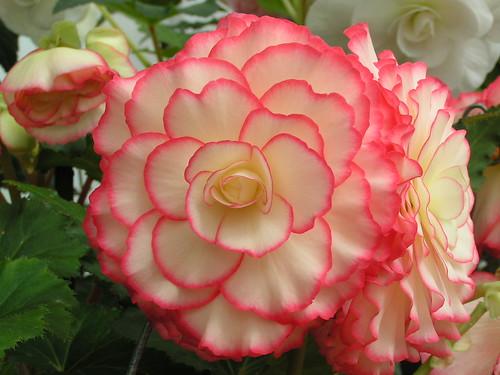 flowery flower 1