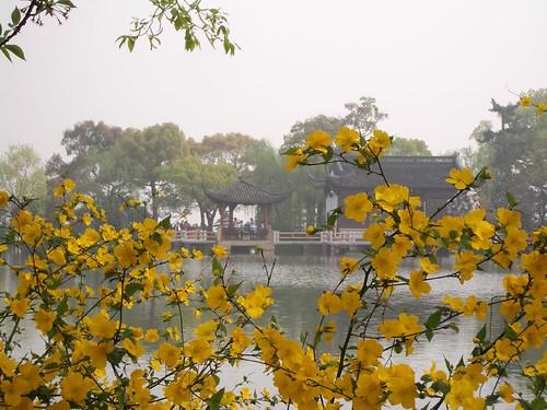 Pavillion Through Blossoms