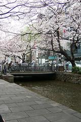 Takasegawa 04 April 2006 (MShades) Tags: trees japan river canal spring kyoto    sakura  takasegawa  kiyamachi