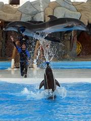 Dolphins Show - by Hamed Saber