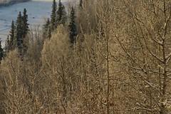 IMG_4251.JPG (jraiii) Tags: nature alaska deltajunction northpole