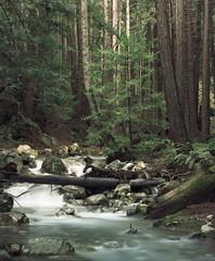 Lime Kiln State Park, California 2005 (artandscience) Tags: california kodak redwoods 160vc largeformat
