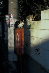 (eba317) Tags: film animals st japan zeiss cat 50mm tokyo snap contax srp nakano 東京 猫 ねこ planar 中野 eba contaxst eba317 新中野 shinnakano eba317catsanddogs hirofumiebata