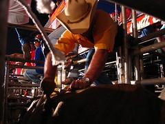 tying (joaobambu) Tags: 2005 brazil man hat topv111 brasil interestingness interesting cowboy action culture photojournalism western rodeo brazilian hombre tying echapor echapora fotojornalismo echaporaense fotojornalism