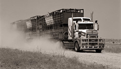 Roadtrain, Just South of Birdsville (cjbj) Tags: road blackandwhite truck cattle farm australia dust gravel roadtrain