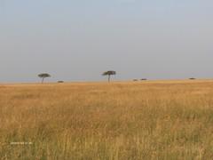 HPIM1583 (http://jvverde.birdsby.me/v2/) Tags: kenya qunia africa travel frias