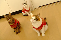 DSCF0130 (junku) Tags: cats cat kitten finepix kitties fujifilm  z2 kin rika   fuwari fujifilmfinepixz2