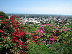 Ponce, Puerto Rico, con trinitarias / Bougainvillea (Oquendo) Tags: city pink flowers red panorama orange flores ice puerto flora view puertorico ciudad panoramic bougainvillea rico sd400 tropical raspberry ponce botanica trinitarias brasiliensis oquendo bougavillia