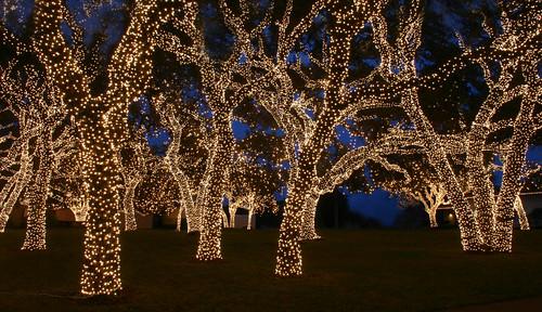 Christmas lights College Station? - 2CoolFishing