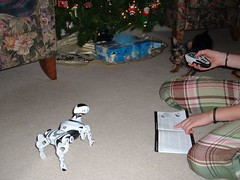 12/25/05 - My Parents' House: Mom, Lottie, and Megan (mavra_chang) Tags: christmas family dogs robots chihuahuas christmas2005 maltese yorkshireterriers lottie christmasday christmasday2005 robotdogs robodogs morkies