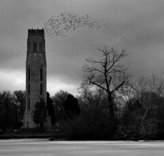 Peace Carillion and Flock of Birds (gsgeorge) Tags: park city winter cold water birds pond december dusk michigan flock detroit belltower desolate carillion bats belleisle citypark publicpark publicplace fredericklawolmsted publicland geoffgeorge gsgeorge geoffreygeorge gsgfilms gsgfilmscom