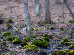 Romantic light of the Day (dee_r) Tags: trees tree green lighting muted mutedcolors moss ilovenature tag1 tag2 tag3 taggedout