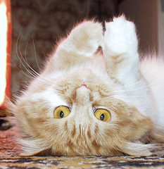 up side down (Alexei Kholodov) Tags: top20catpix top20hallfame top20halloffame