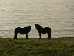 sweet playfulness series (1) (MadPole) Tags: horses horse caballo cheval ross kali uma cal ponies ros cavallo cavalo pferd esp mal kin konie each kuda alogo ka horsies hest equus hevonen chevaux paard cavall kon hors sous  rta kone yegua hst  hesp assa   l  morin ko arklys hestur hynder  chaval animalemotions koniki  perd  eoh  zaldi k caval chelee  ks caballu konj march  kabayo soquili sobah kobila evalo hobu hobune cjaval cabalo  ippos   kavaju  ghod  av  turag hross kavalo capall  kudure ciaval tashunke caballus zirgs k  iemel cahuayo kavale hengest mearh kaviyu grast harmasari grasni load heasta cubaddu acchettu coallu va k  beygir  madpolestream