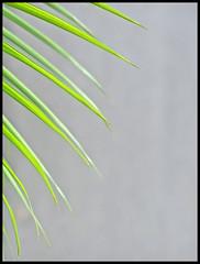Nature Arts (Wilson Low) Tags: art leave nature beautiful topv111 composition ilovenature interestingness nice singapore gorgeous simplicity topv fav lovely elegant simple guten less minimalist effective topphoto wilsonlow