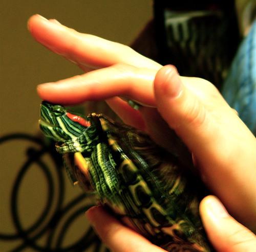 turtle love.