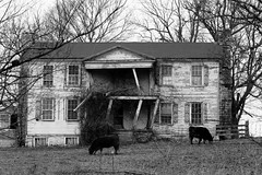 (code poet) Tags: county blackandwhite bw house landscape cow cows kentucky decrepit jessamine rundown