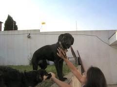 2005-02-20 - Preta 02 (Henrique Oscar Loeffler) Tags: pets preta