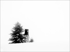danger zone for rabbits (Cilest) Tags: winter blackandwhite bw snow tree wow austria cilest kurt tlpoedeleted waldviertel utataspace