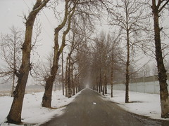 Endless Road, Karaj, Persia (Iran) (eshare) Tags: road snow tree persian iran persia iranian iranians endless persians karaj photofaceoffwinner pfogold