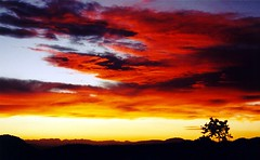Grandview Sunset, Ancient Bristlecone (cmrowell) Tags: california sunset red orange yellow topv111 wow ilovenature gold interestingness whitemountains scanned grandview myfavorite sierranevada ancientbristlecone inyonationalforest ancientbristleconepineforest explored i395july1996 grandviewcampground bestnaturetnc06
