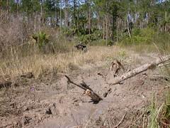 Mud hole of death, post-extrication (pajarero) Tags: mud florida atv fieldwork quicksand floridapanthernationalwildliferefuge
