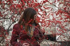 B_red berries full (Aradia B.) Tags: arboretum kal 010806