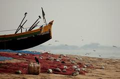 delta (subhasish) Tags: india seabeach andhrapradesh sea winter