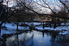 Central Park's Pond