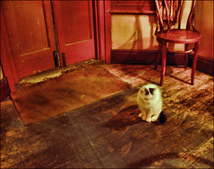 . The Pub Cat . (3amfromkyoto) Tags: door uk cambridge england white house home public cat pub chair feline entrance mat welcome doormat cambridgeshire floorboards 3amfromkyoto flickr:user=3amfromkyoto
