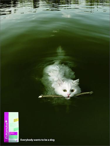 Фото, картинки: Прикольная реклама собачего корма