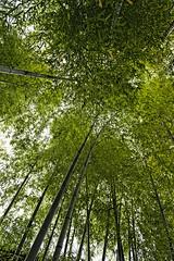trees_PBN4572 (pbnewton) Tags: bridge japan tokyo rainbow buddha great hasetemple yuigahamabeach kotokuintemple enoshimaisland odaibaisland nikond4 rhetoricru enodentrain pbnewton kamakurahighschool sasukeshrine kamakuracoast