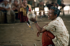26-152 (ndpa / s. lundeen, archivist) Tags: people bali man color men bird film smile face smiling birds 35mm indonesia 26 nick cock arena southpacific handlers rooster cocks 1970s spectators 1972 handler roosters indonesian crouching cockfight gamecock onlookers squatting gamecocks balinese dewolf oceania pacificislands cockfighting nickdewolf photographbynickdewolf cockfightingarena reel26 cockfightarena