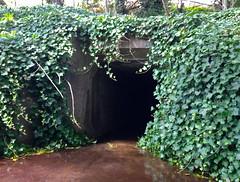 (always_exploring) Tags: oregon tunnel virgin lurking