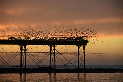 Starlings on the move over the pier (karen leah) Tags: sunset water aberystwyth dusk sky cloud pier seascape golden winter december starlings colour sunlight greaterphotographers greatphotographers greatestphotographers