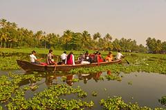 DSC_9238 b (Tartarin2009 (travelling)) Tags: tartarin2009 india kerala allepey backwaters travel nikon d600 waterplant waterscape boat paddling canoe