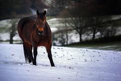 Back off Buster (Re-Edit) (JDWCurtis) Tags: reedit snow snowy brecon breconbeacons breconbeaconsnationalpark nationalpark horse stare character animal farm farmanimal staredown