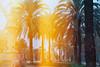 Yellow palm trees (CristinaDiaconu23) Tags: analog analogue film minolta x300s 35mm ishootfilm lomography lomographycolor100 sunnydays yellow palmtree orange burned spain barcelona barcelonaexperience arcdetriomf oudoors nature travel view vintage 7dwf