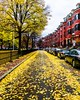 Boston Fall in Red and Yellow ((Jessica)) Tags: sony unionpark boston brownstones sonya6000 massachusetts leaves foliage sigma sigmalens autumn a6000 newengland carpetofleaves sigma19mm fall sonyalpha symmetry yellowleaves sonyalpha6000 leading lines south end tree outdoor plant vanishingpoint leadinglines southend yellowbrickroad street red yellow colorful historic neighborhood 19mm lightroom seasonal brick outdoors vibrant season alpha houses seasons trees unitedstates buildings townhouses
