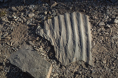 Rippled Stone in Great Basin National Park (Lee Rentz) Tags: greatbasinnationalpark nevada snakerange basinandrange desert forms fossil greatbasin lines nature northamerica palm pattern patternsinnature rippled ripples rock southwest stone thewest unitedstates usa wave west