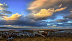 the trees Iceland collects from the Sea (lunaryuna) Tags: iceland northiceland coast shoreline sea seascape landscape sky clouds cloudscape sunset stormclouds sundown beach driftwood lightmood weather weathermood lunaryuna
