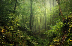 WelcomeToTheJungle (BphotoR) Tags: bphotor wald forest welcome green jungle october autumn herbst