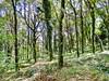 The Forest (Francesco Impellizzeri) Tags: erice sicilia