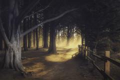 A glimpse into the woods (pixelmama) Tags: california connieswoods mossbeach mossbeachwoods pixelmama sunbeams cypresstrees fitzgeraldmarinereserve explore