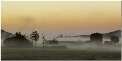 Dawn with fog (AmaiaArzamendi) Tags: dawn amanecer egunsentia udazkena autumn fall orange naranja laranja naturaleza natura nature landa ullibarriganboa araba álava euskalherria paisvasco paysbasque basquecountry dasbaskenland pantano urtegia swamp canoneos60d niebla fog behelainoa